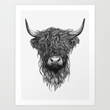 Medium highland cattle 2mv prints